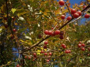 autumnolivesready