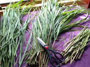 lemongrassharvesting