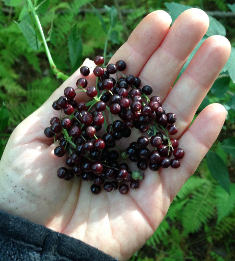 ElderberryhandSQ