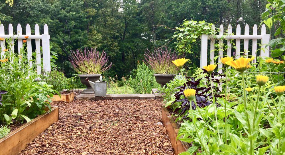 Blog wintergreen botanicals maria noel groves clinical herbalist herbal clinic for Maria s garden center